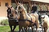 Horse-carriage driving in Bikacs in Zichy Park Wellness Hotel